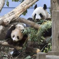 Around 1,200 people line up on Thursday at Ueno Zoo to see giant panda cub Xiang Xiang and mother Shin Shin, as a first-come, first-served system for viewing kicked off. | KYODO
