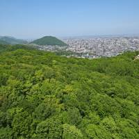 A view of the Moiwa Primeval Forest and Ishikari Bay from the observation deck atop Mount Moiwa, Sapporo.   MELISSA DEVAUGHN