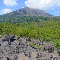 Sakurajima is a contrast of the barren and the supra-fertile with dead zones and large swaths of green.   STEPHEN MANSFIELD