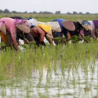 Farmers plant rice close to the Citarum River outside Muara Gembong, in Indonesia's West Java province, on Feb. 22. | REUTERS