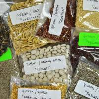 An array of Andean ingredients considered superfoods are pictured at the food lab of La Molina National Agrarian University in Lima on Jan. 24. | AFP-JIJI