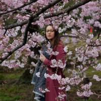 Invasive beetle threatens Japan's beloved cherry blossoms