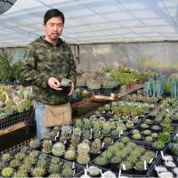 City in Aichi promotes cactus-based foods in bid to save production as farmers gray