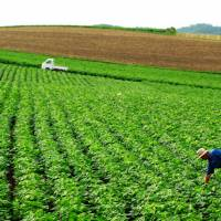 Abolition of Main Crop Seeds Law puts nation at risk