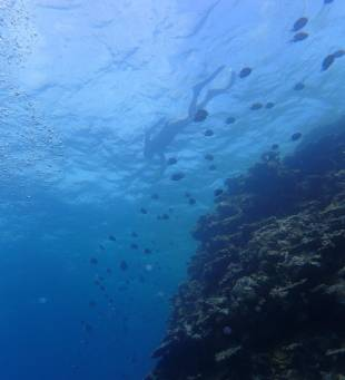 A snorkeller swims above a reef in the north of Ishigaki Island.