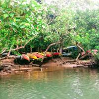 A journey by kayak through Iriomote's mangrove forests