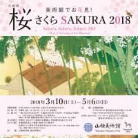 Sakura, Sakura, Sakura 2018: Flower Viewing at the Museum!