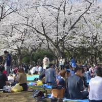 Reserve a cherry blossom viewing spot in Fukuoka