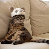 A fuzzy tale of Japan's famous cats in hats