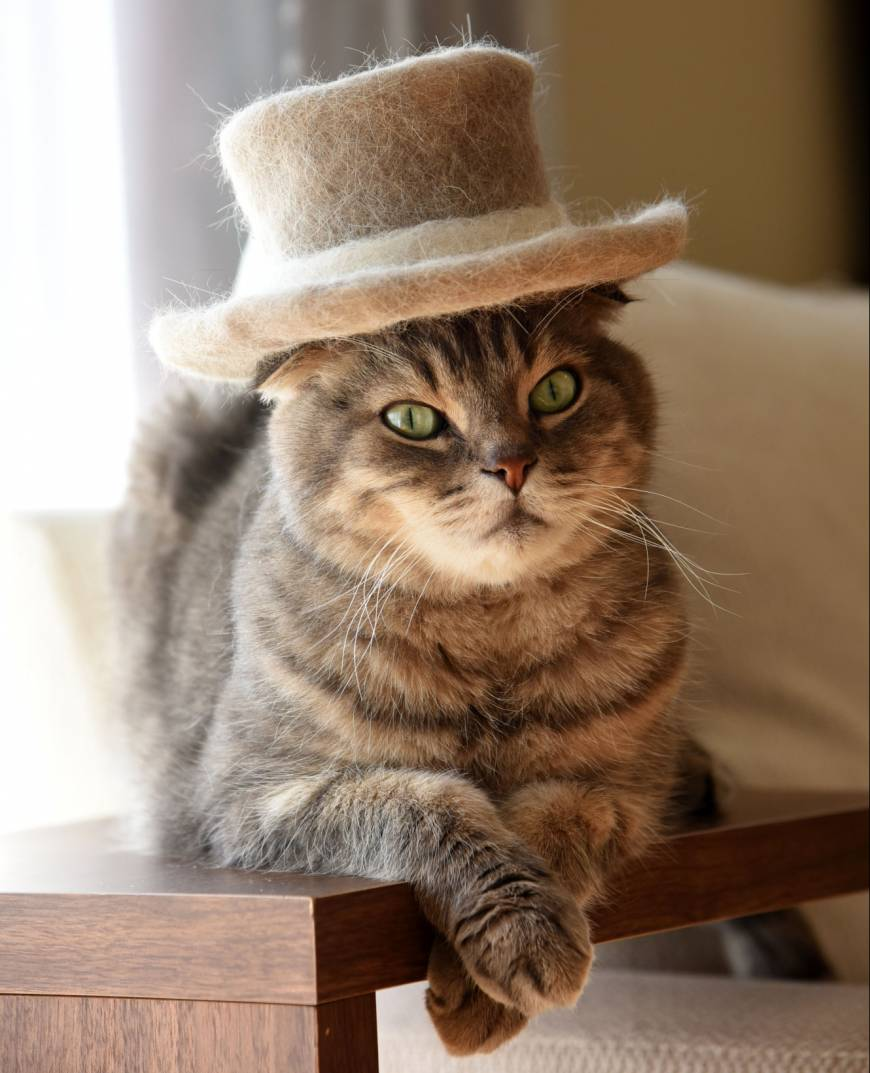 Nyaa sports a hairy top hat made from his own shed hair.