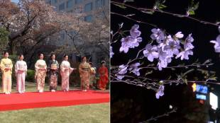 [VIDEO] Cherry blossom season 2018 in Tokyo, Japan