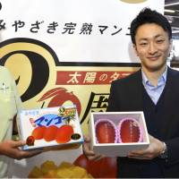 Japanese mangoes tie record, fetching ¥400,000 at season's first auction