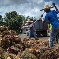 Japanese scientists look to help palm oil industry tap green energy demand