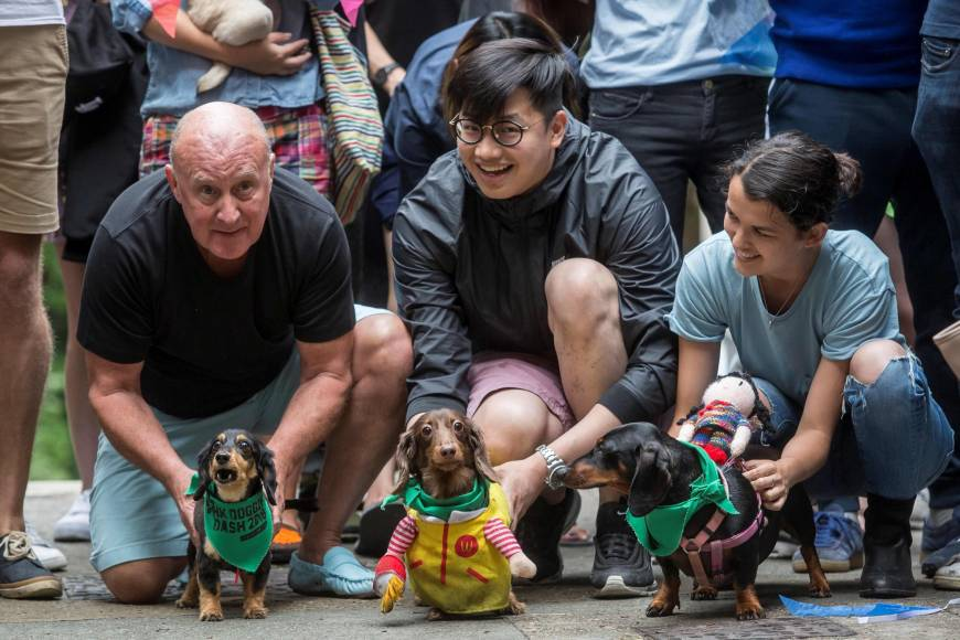 Inaugural Hong Kong 'doggie dash' raises funds for abandoned pooches