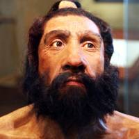 Neanderthal nose: All the better to breathe with, study shows