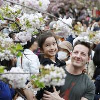 Visitors to the Japan Mint headquarters in Osaka view cherry blossoms on Wednesday as part of an annual event that has been held for more than 130 years. | KYODO