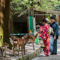 Oh deer! Nara urges use of 'deer sign language' by tourists after more get bitten by hungry animals