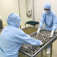 Vast, bioclean Kumamoto silkworm factory aims to revive Japan's sericulture sector