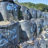Plastic bags filled with radioactive soil are placed in temporary storage in Nihonmatsu, Fukushima Prefecture, in October. | KYODO