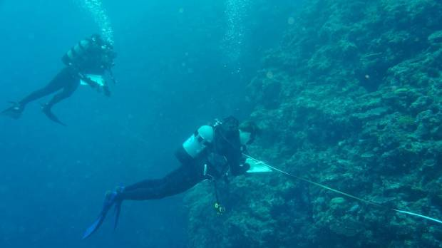Visitors to Okinawa invited to be citizen scientists as tourism takes its toll on coral