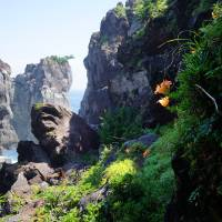 Natural bounty: Flowers cling to the lush, verdant hillside along the jagged cliffs of the Jogasaki Coast. | ANDREW CURRY