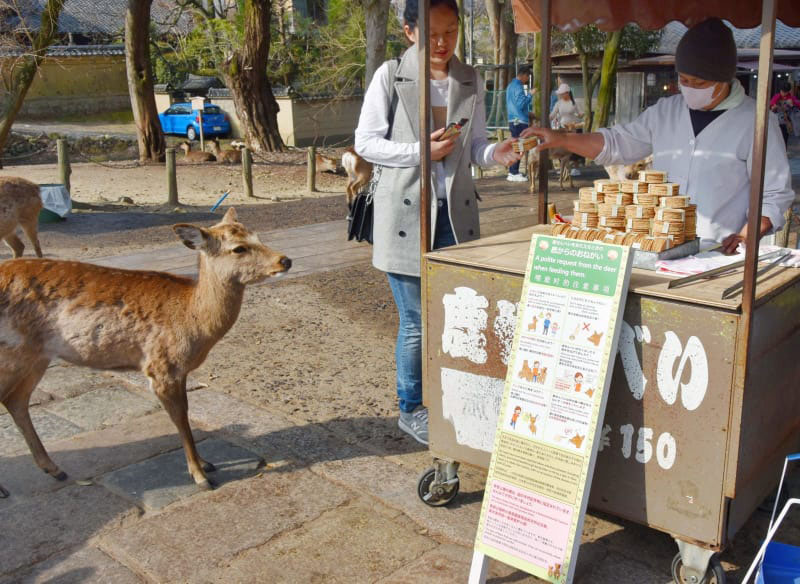 Cracker addicts: A deer waits for a treat in front of a stall selling shika senbei (rice crackers for deer) in Nara. The board in front lists 'Requests from the deer.' | KYODO