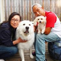 Great haven: Great Pyrenees Coco finds a new home in Tokyo