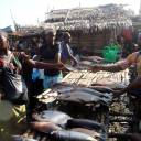 Traders sell fish at an open air market near the Congo River during a vaccination campaign aimed at beating an outbreak of Ebola in the port city of Mbandaka, Congo, on Wednesday.