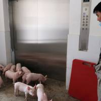 A worker waits for an elevator to transport young piglets in the Guangxi Yangxiang's high-rise pig farm on March 21. | REUTERS