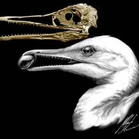 Reconstructed skull from ancient gull-like bird with dinosaur traits shows beaks started evolving earlier than thought