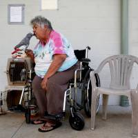 Linda Dee Souza, 72, of Kalapana-Seaview, kisses one of her parrots at a Red Cross evacuation center in Pahoa during ongoing eruptions of the Kilauea Volcano in Hawaii Tuesday. | REUTERS