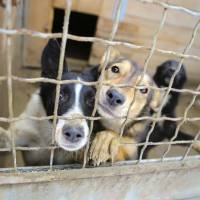 In reversal, Japan's Environment Ministry to revise policy on eliminating culling of abandoned pets