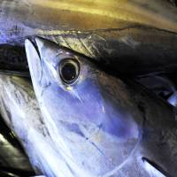 Fish parasite outbreak puts sales of raw bonito on the ropes