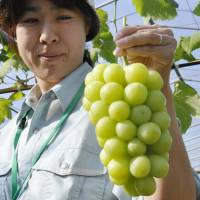Japan acts to curb unintended fruit outflows after curling team shows affection for Korean strawberries