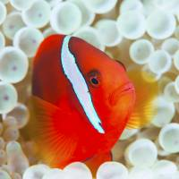 Scuba diving in Japan: Beneath the sea, a paradise of color and life