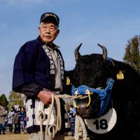 Annual festival sees cows under the hammer for a cool ¥25 million