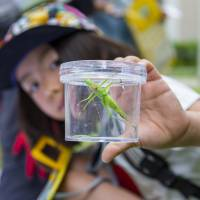 A participant shows a grasshopper during the Discover Biodiversity in the City Tour in Tokyo on May 19.
