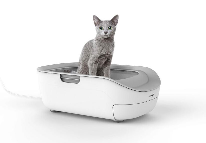 Sharp to launch smart toilet for cats that can identify health problems