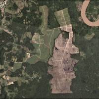 A oil palm plantation deforestation is seen from a satellite image in the northern Amazon region of San Martin, Peru. | UNDATED HANDOUT PHOTO PROVIDED BY MATT FINER / VIA REUTERS