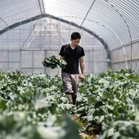 Lonely furrow: Pay dirt eludes organic farms in Japan