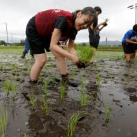 Tourists from universities in Tokyo plant rice seedlings in a paddy field during a rice planting event on May 19 in Namie, Fukushima Prefecture, near the tsunami-crippled Fukushima No. 1 nuclear power plant. | REUTERS