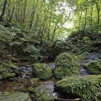 An area of forest named Yambaru in the northern part of Okinawa is shown in April. | KYODO