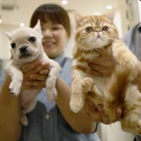 Pet insurance market in Japan expanding with rise in life spans, veterinary bills