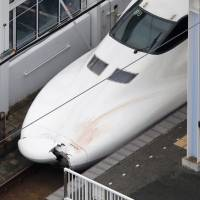 Damage is seen on the nose of the Nozomi No. 176 bullet train Thursday at JR Shin-Shimonoseki Station on the Sanyo Shinkansen Line, after it fatally collided with a man who had intruded onto the tracks. | KYODO