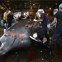 Japan to seek partial resumption of commercial whaling