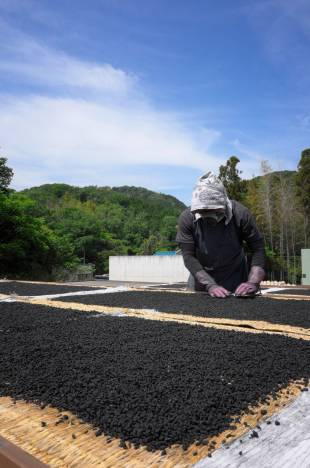 Granulated pellets are baked in the sun at Kato Fireworks in Aichi Prefecture.
