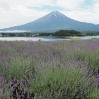 Good morning: The view from Oishi Park takes in Mount Fuji, which makes it a great spot for camping.