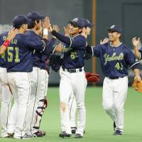 The Tokyo Yakult Swallows celebrate after beating the Hokkaido Nippon Ham Fighters 5-1 on Sunday at Sapporo Dome. | KYODO