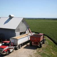 A trailer is filled with soybeans at a farm in Buda, Illinois, July 6. | REUTERS