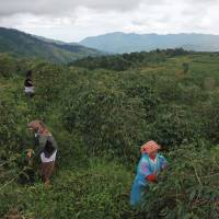 Climate change threat sends Japan's Key Coffee on bean hunt